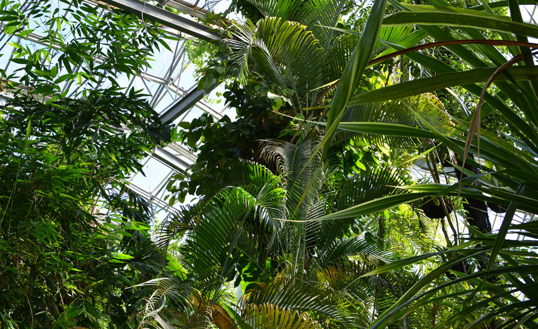 Amsterdam Tipp De Hortus Botanicus Der Botanische Garten In