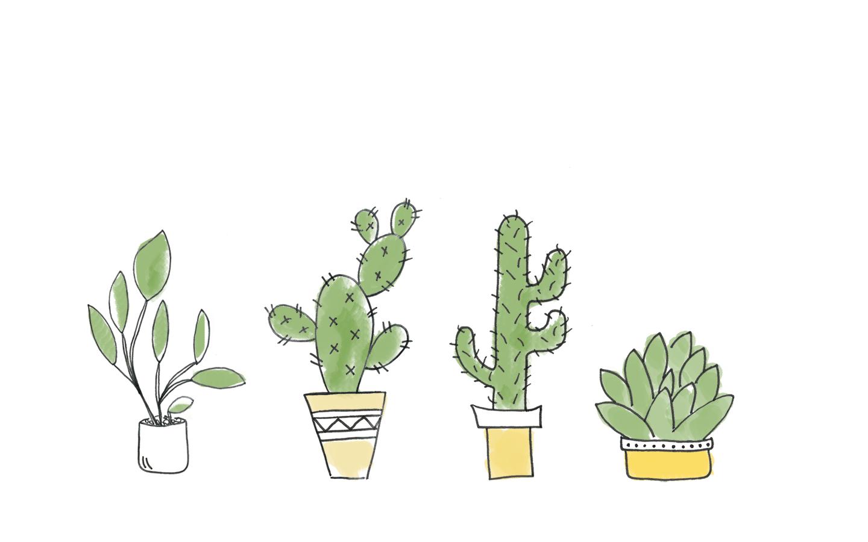 Cacti-Wallpaper-bunt-1440_PiximitMilch