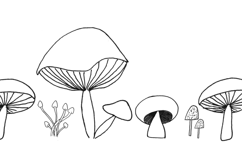 Mushroom-Wallpaper_1440
