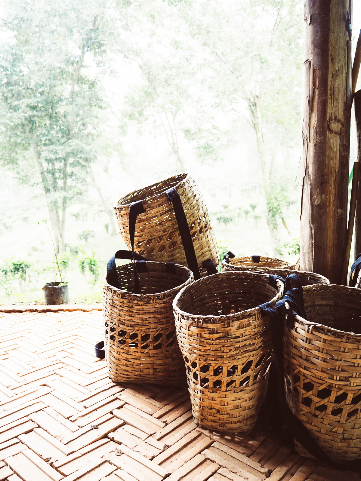 Tee-Ernte |Pixi mit Milch