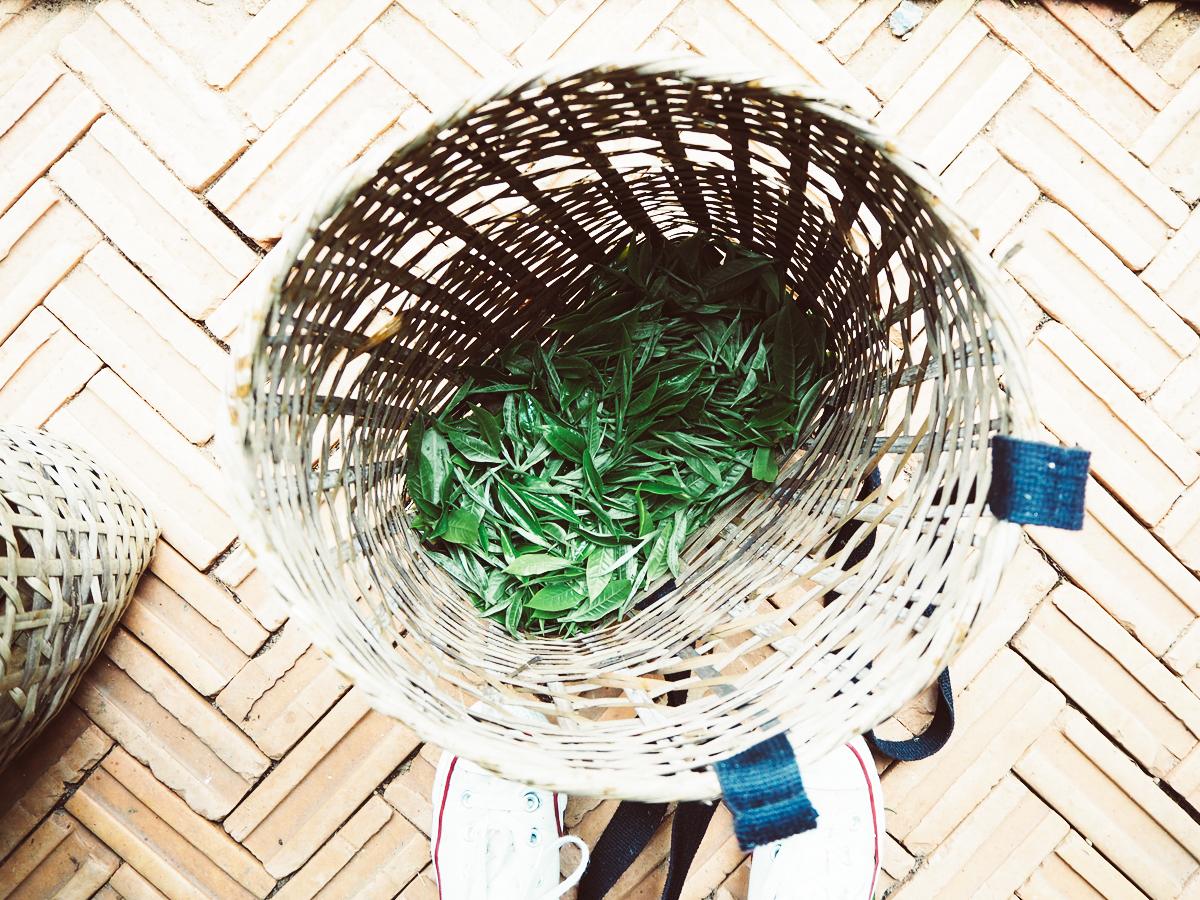 Teeblätter | Pixi mit Milch