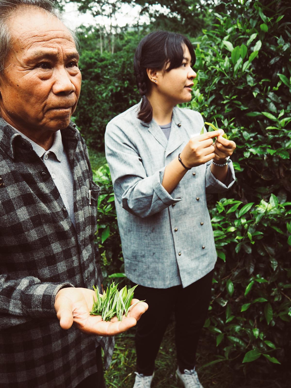 Araksa Teeplantage Thailand | Pixi mit Milch
