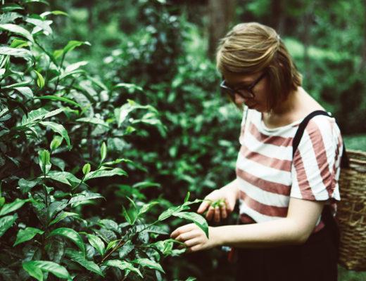 Teeplantage-Teaser_PiximitMilch