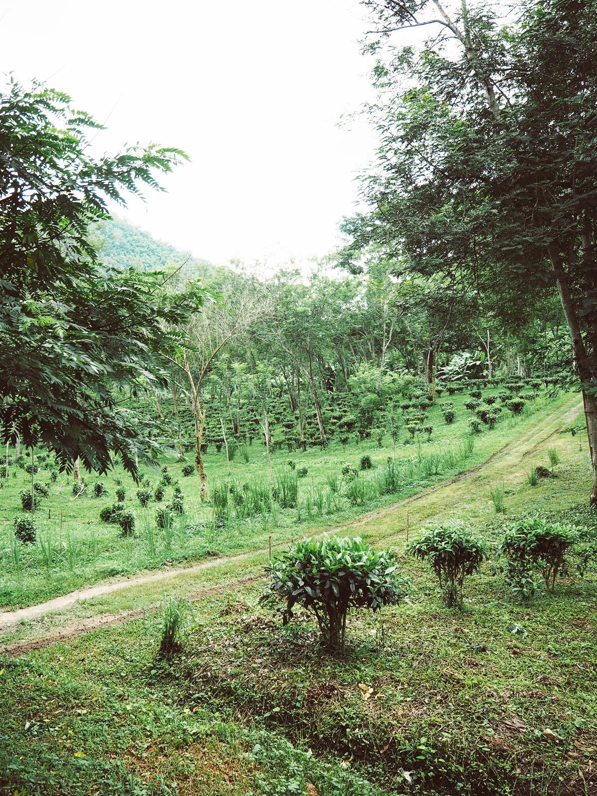 Teeplantage | Pixi mit Milch