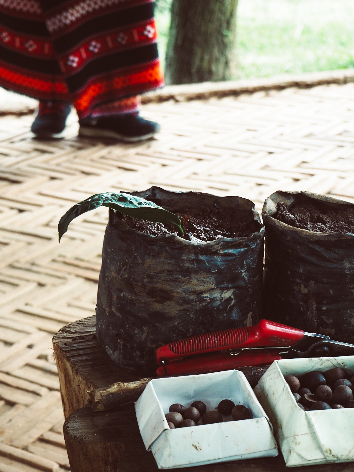 Teepflanze | Pixi mit Milch