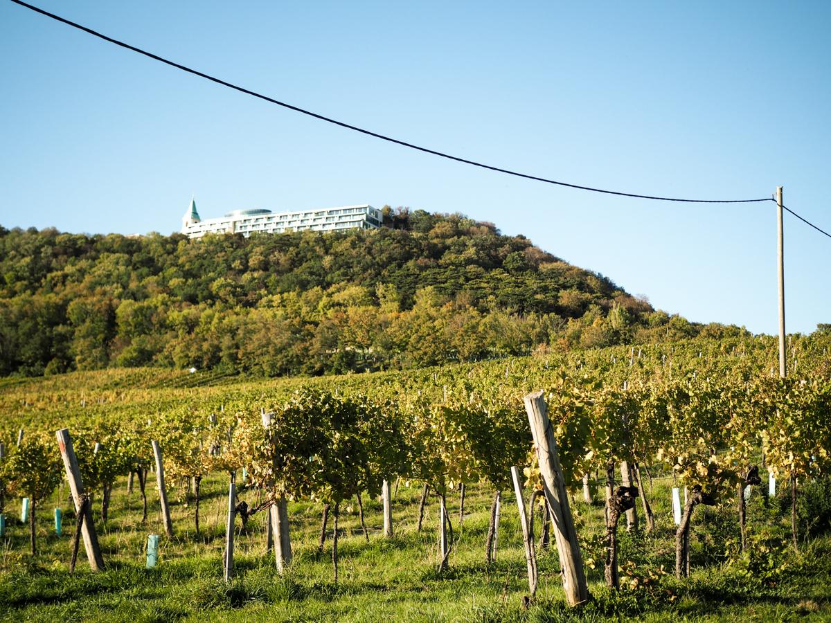 Weinwandern Wien: Cobenzl | Pixi mit Milch
