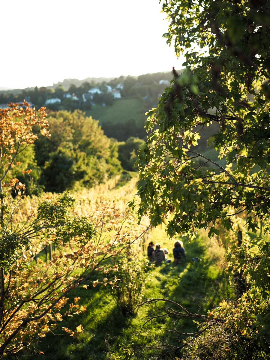 Weinwandern Wien im Herbst | Pixi mit Milch