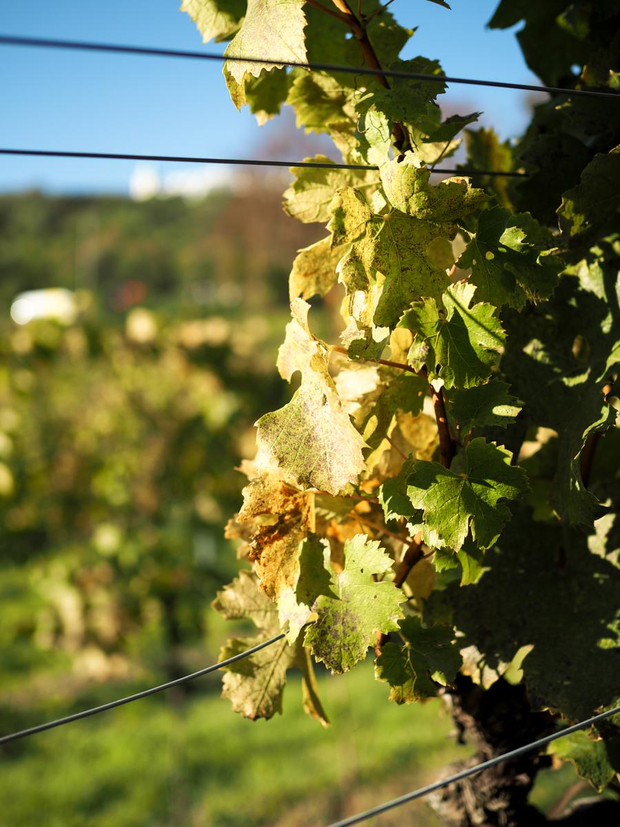 Weinwandern Wien Heurigen | Pixi mit Milch